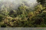 Bosque nublado en Nor Yungas