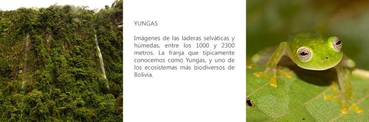 yungas-largo