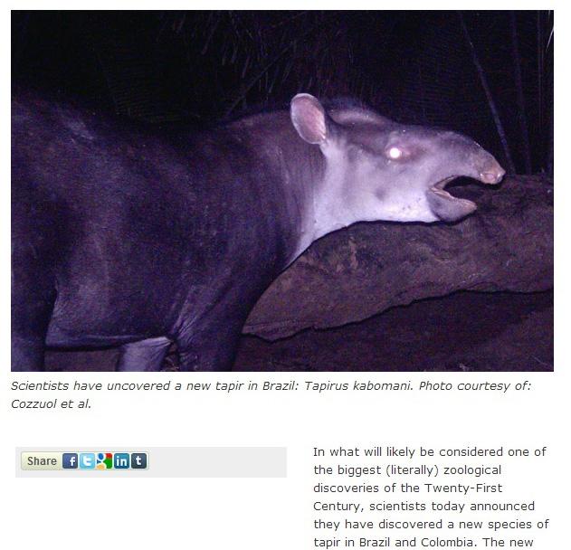 tapirus nov