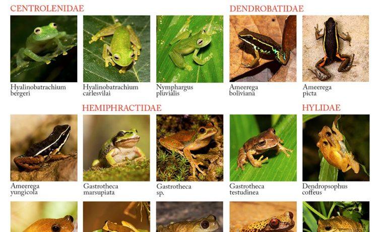 Lista-de-especies-completa-version-2
