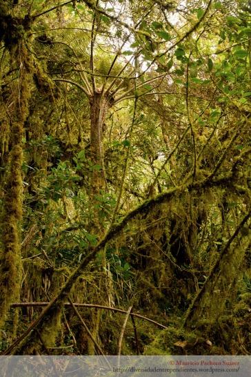El bosque nublado es uno de los bosques más cerrados que existen.