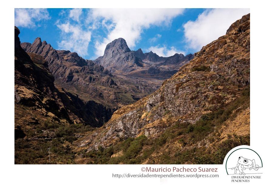 Las laderas amazónicas del regente de La Paz, el habitat de la Criticamente Amenazada Psychrophrynella illimani