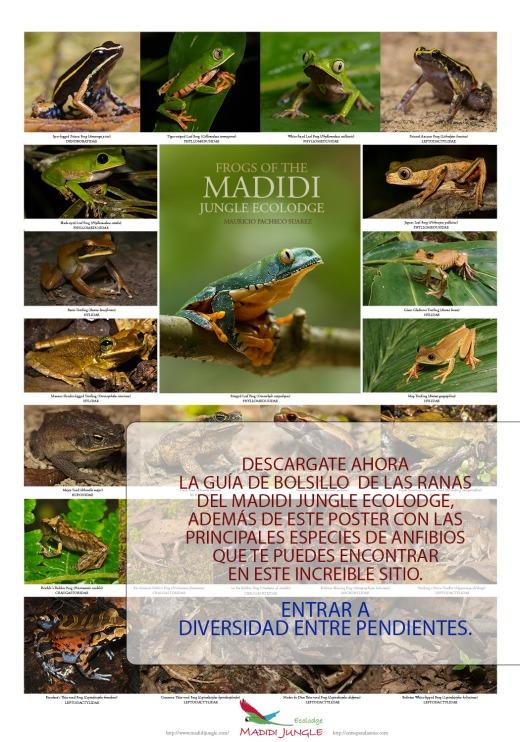 Poster-ranas-del-Madidi